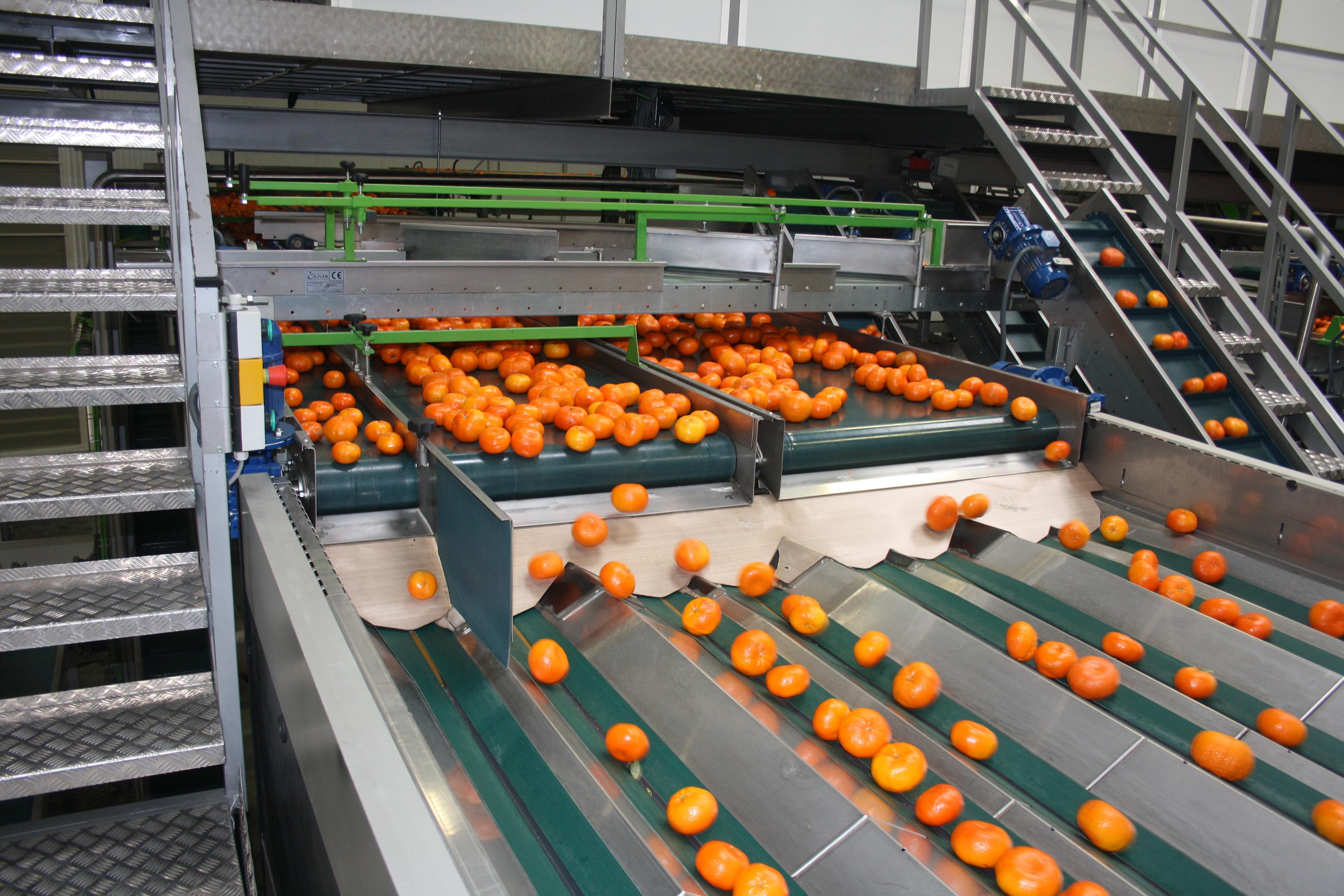Frutinter - clementinas