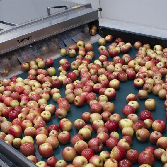 Micersa 1 - manzanas