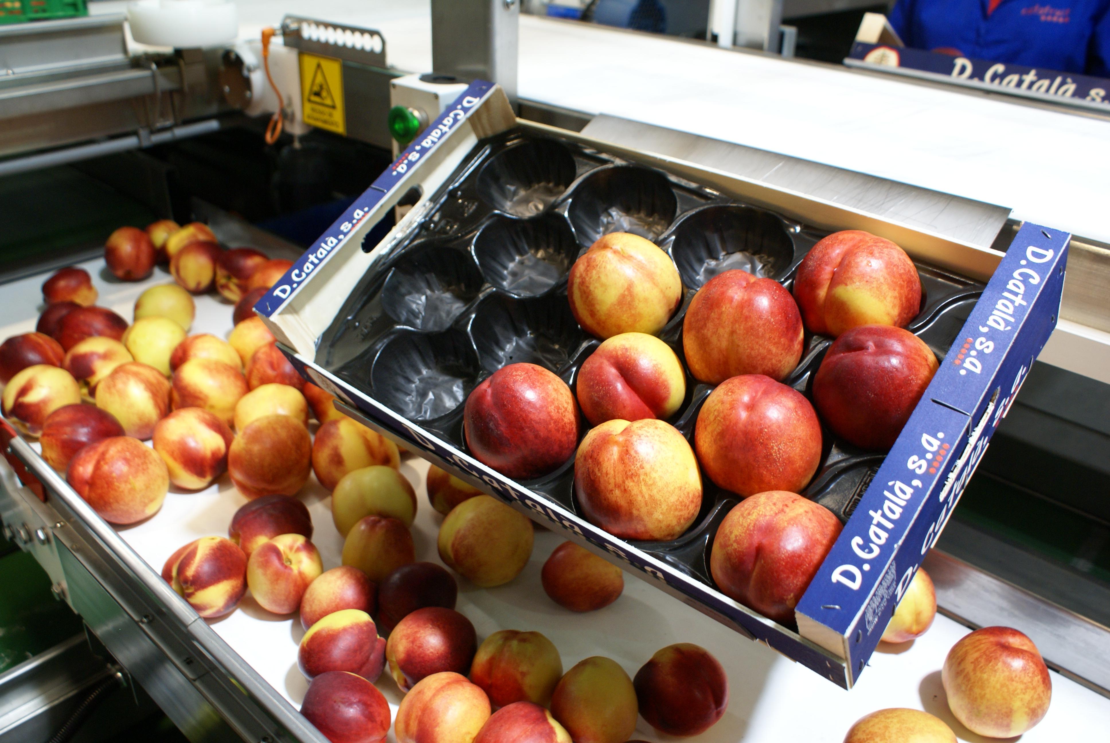 Sant Domènech 13 - frutas de hueso